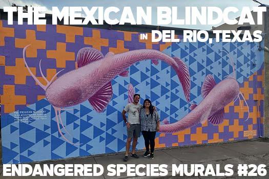 Endangered Species Murals #26: The Mexican Blindcat