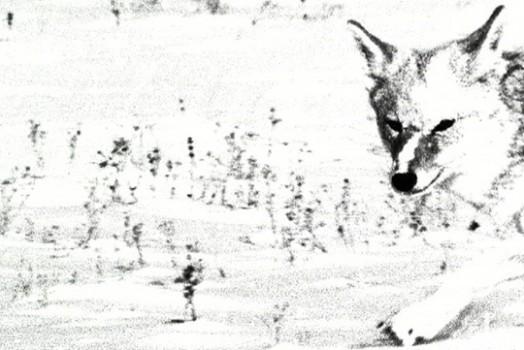 Wild Beasties, Oct. 6th
