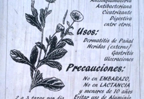 Medicinal Plants in Chile