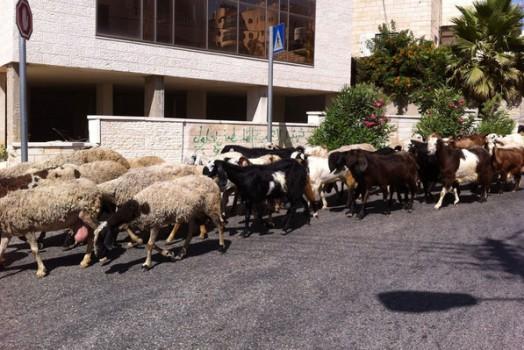 In Palestine pt.21