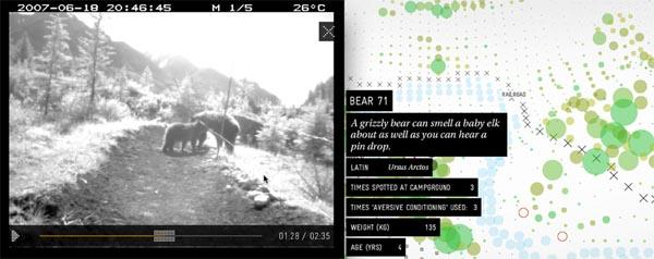 bear_71.jpg