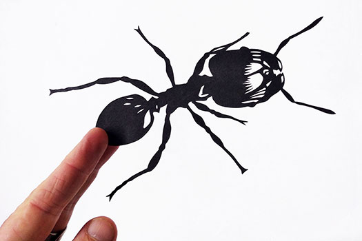 Insect Papercuts for a commission