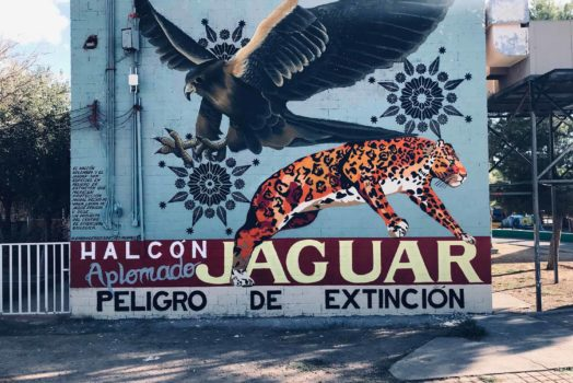 Species in Peril: Murals on the Border