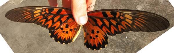 butterflysmall2.jpg