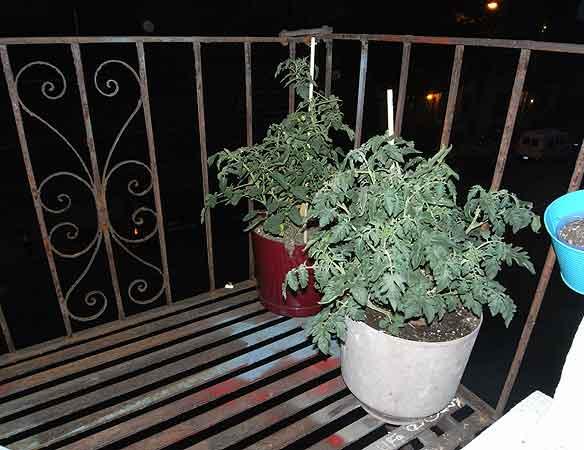 gardenblog.jpg