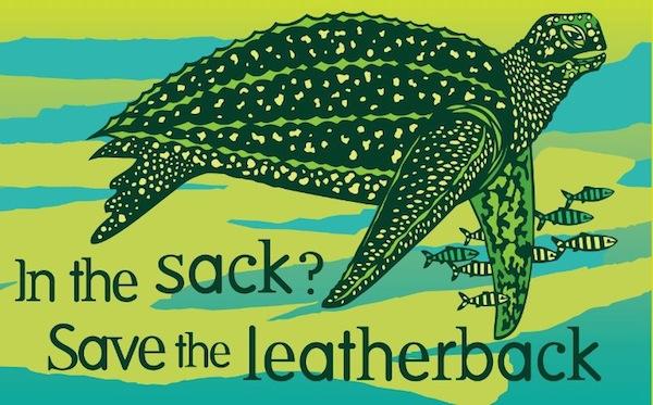 leatherbacksmall.jpeg