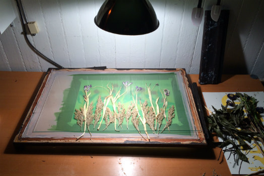 How To: Screenprinting with Dried Plants
