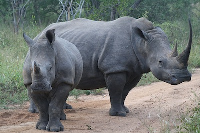 The Rhino Rescue Project