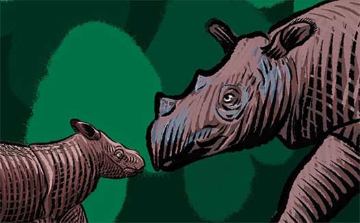 The Sumatran Rhino: Not Doomed
